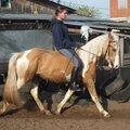 Верховая езда обучение