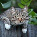 Фотосъёмка животных
