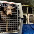 перевозка животных без сопровождения