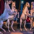 Цирковые номера с лошадьми