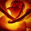 Изготавливаю светильники и торшеры в виде больших роскошных цветов