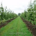 Опрыскивание, обработка сада от вредителей и болезней, обрезка, посадка, обслуживание сада, уход, агроном.