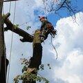 POPILKA.ru, Валка деревьев с корнем в Горках-6