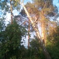 Удаление,спиливание деревьев