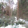 Расчистка участков от деревьев и поросли