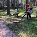 Валка и спил сложных деревьев частями с вывозом под ключ