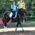 Нина Викторовна Овчинникова, Занятие по конному спорту в Москве и Московской области