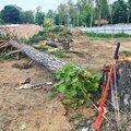 Валка (спил) деревьев целиком