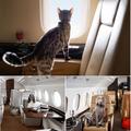 Аренда частного самолета для перелета с домашними животными