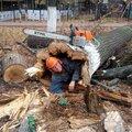 Денис Кожевников, Корчевание дерева в Электроуглях