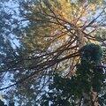 Снятие RC моделей, планеров,квадрокоптеры с деревьев разных пород и высот.