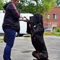 Алина Копычева, Дрессировка собак в Ясенево