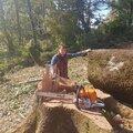 Артем Ковалев, Корчевание дерева в Прасковеевке