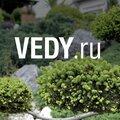 Веди, Посадка лиственного дерева в Москве