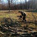 Спил деревьев, кронирование, опиловка сухих веток,расчистка участка, покос кустарника и многое другое.
