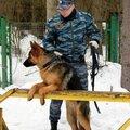 Олег Мурчаков, Передержка собак в Лесном городке