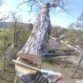Удаление деревьев. Спил деревьев. Вырубка деревьев.