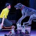Цирковые номера с собаками