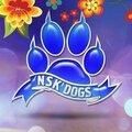 NSK Dogs, Мастер-классы по обращению с животными в Дзержинском районе