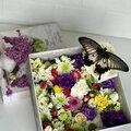 Салют из живых тропических бабочек 🦋