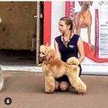 Дарья Чудинова, Услуги для животных в Городском округе Уфа