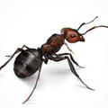 Уничтожение муравьев .