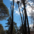 Удаление деревьев: спил, валка, вырубка, обрезка, кронирование.