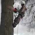 Промышленный Альпинизм, Корчевание дерева в Городском округе Лобня