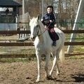 Занятие по конному спорту: индивидуально, разовое занятие