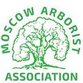 Арбористы москвы, Корчевание дерева в Сергиево-Посадском районе