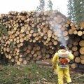 Фумигация древесины (обеззараживание дерева)