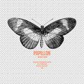 Papillon D-Studio, Сайт-портфолио в Якиманке