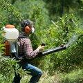 Обработка деревьев от вредителей и болезней.