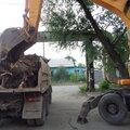 Вывоз спиленных деревьев и веток с участка