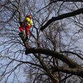 Удаление (валка) дерева по частям
