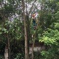 Спасение кошек и котят с деревьев