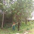 Уборка участков от деревьев