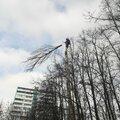 Кронирование,глубоко-омолаживающая обрезка,спилить верхушку дерева!