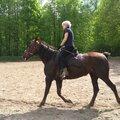 Прогулки на лошадях в Москве, обучение верховой езде, фотосессии, катание на пони