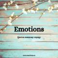 Emotions, Доставка цветов в Москве и Московской области