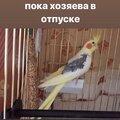 Передержка птиц