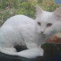 Стрижка кошек