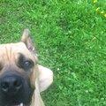 Передержка собак