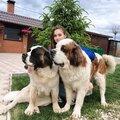 Ирина Шувалова, Передержка животных в Тверском районе