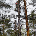 Валка деревьев с корнем
