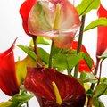 Обучение керамической флористике -лепке реалистичных цветов из полимерной глины
