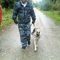 Антон Анисимов, Услуги для животных в Караваевском сельском поселении