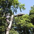 Спил (удаление, валка) деревьев частями. Обрезка сучьев. Кронирование.