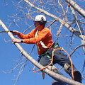 Удаление, валка, вырубка, спиливание, обрезка и кронирование деревьев любой сложности