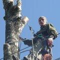 Дмитрий Евгеньевич П., Корчевание дерева в Электроуглях